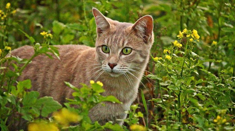 kat tussen de planten