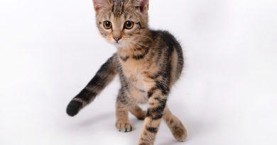Wanneer is een kat volgroeid?