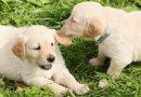 Hondenpaspoort verplicht vanaf 2020