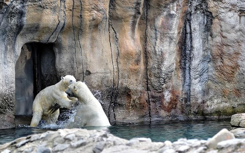 ijsberen in dierentuin