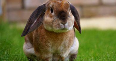 Diarree bij konijnen