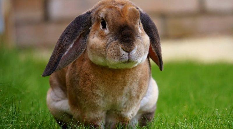 konijn op gras