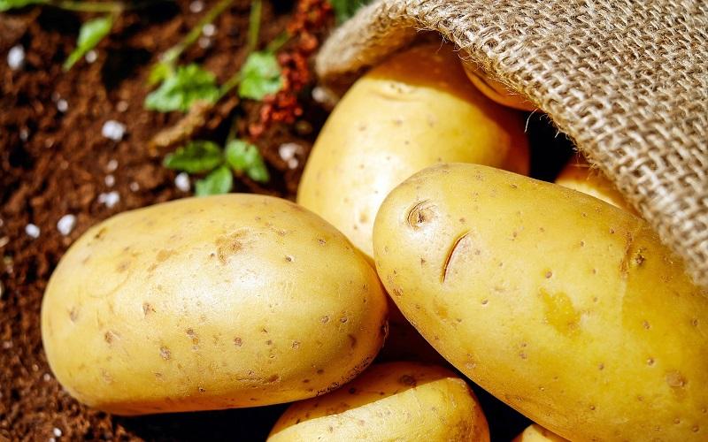 aardappel ingredient kattenvoer