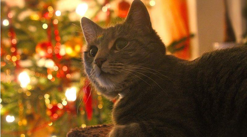 Kerst: de risico's voor hond, kat en andere huisdieren