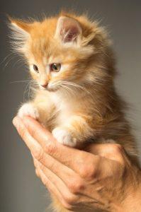 kitten in handen