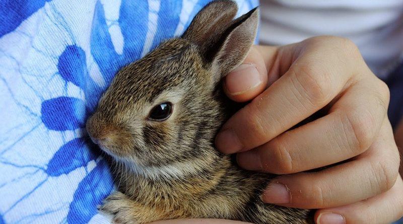 konijn in handen