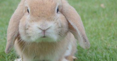 Slijtage van de tanden van je konijn