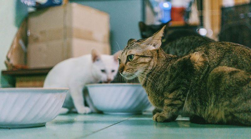 meerdere katten bij elkaar