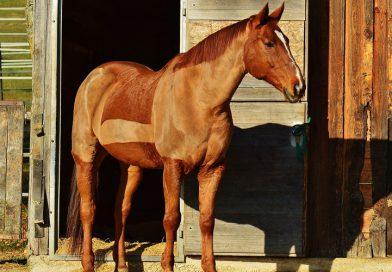 Paard scheren, hoe pak je dat aan?