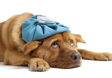 5 vragen over het coronavirus en onze huisdieren