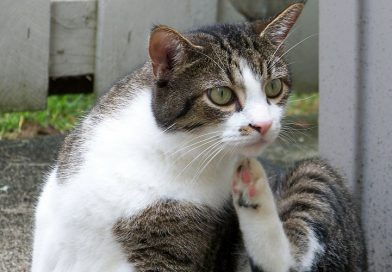 Vlooien bij katten