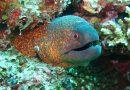 Vissen intelligenter dan ooit gedacht