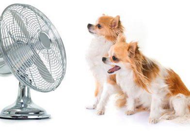 Help je huisdier de warmte door