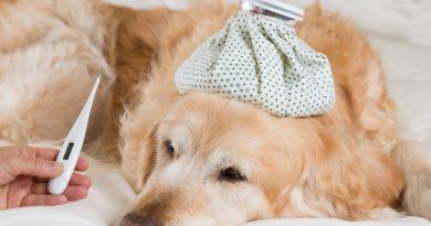 Lichaamstemperatuur van je hond meten