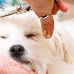 Hond zelf trimmen
