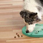 hondenpuzzel met beloning