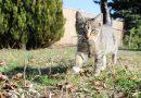 Waarom nemen katten dode muizen en vogels mee naar huis?