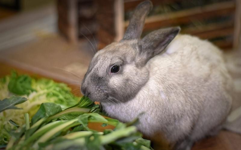 konijn eet groenvoer