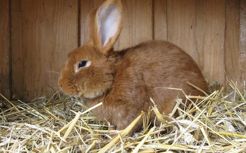 konijn in hok met stro en hooi
