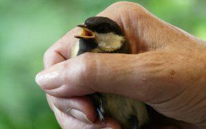 Vogel vasthouden