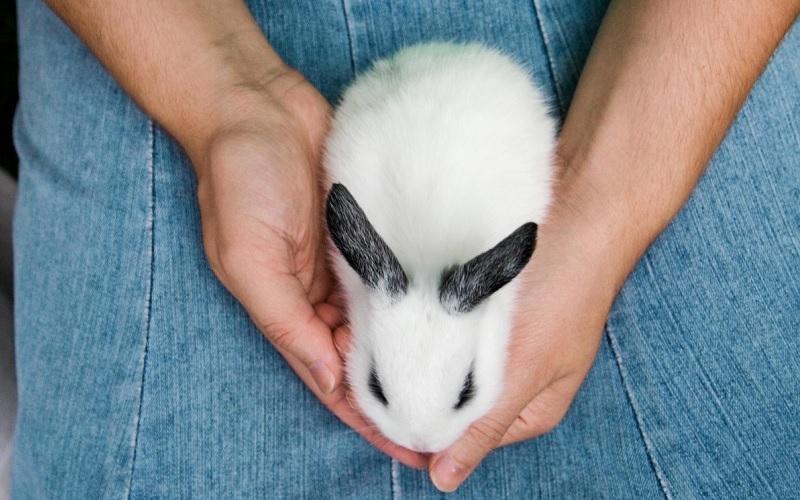 Wit konijntje