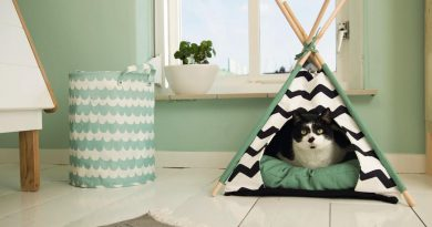 Design kattenmanden, 5 leuke voorbeelden!