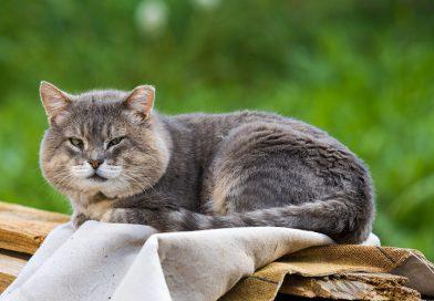Verzorging van oudere kat (tips)
